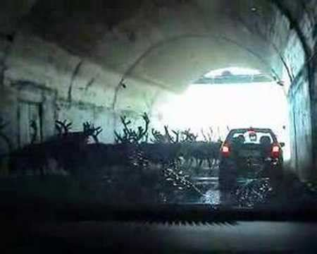 Reindeers blocking tunnel on way to North Cape - YouTube