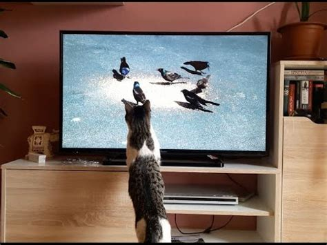 Funny Cat Watching TV - YouTube