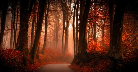trees, Path, Forest, Fall, Leaves, Landscape Wallpapers HD