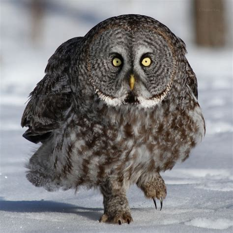 I Don't Give A Hoot: Angry Birds? No! It's Angry Owls