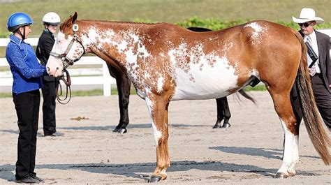 Youth from across the state compete in 4-H Horse Shows at