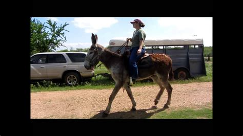 GAITED MAMMOTH JACK IN SLOW MOTION - YouTube