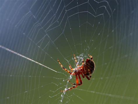 Fear Of Spiders, Snakes Is An Evolutionary Response: Study