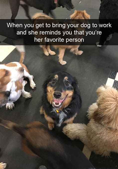Hilarious Dog Snapchats That Are Impossible Not To Laugh At
